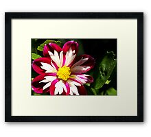 Beauty Before The Frost Framed Print