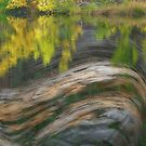 Reflected Fall Forest by bouldercreek