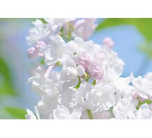 Lilac Flower Photographic Print