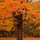 Ostentatious Autumn by Dawne Olson