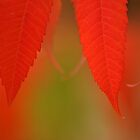 Sumac Sensation II by Dawne Olson