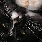 Kitten Oreo up close and personal by Jamaboop
