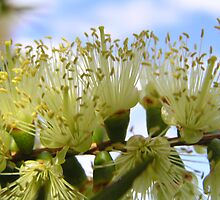 Lemon Bottle Brush by Jan Richardson