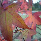 autumn leaves by erattik