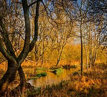 Kintbury Marshes by mlphoto