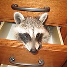 Look What&#x27;s Behind Drawer #2! by jansnow
