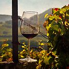 A Taste of the Vineyards by Boston Thek Imagery