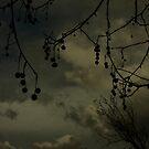 Darksome by transmute