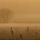 Fence posts in fog by Jim Cumming