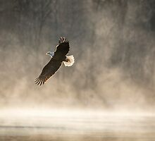 Warming Sunrise With An American Bald Eagle by Thomas Young