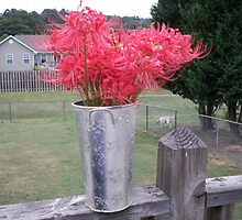 Red Surprise Lilies by Cheryl204