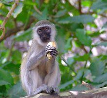 Monkey by HeathaB