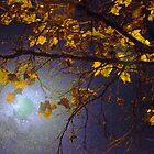 Moonstruck by Lorrie Morrison
