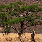 Africa by craig siepman