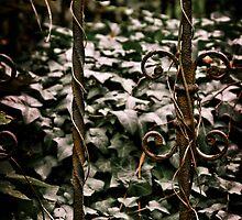 My sacred garden II. by Csaba Jekkel