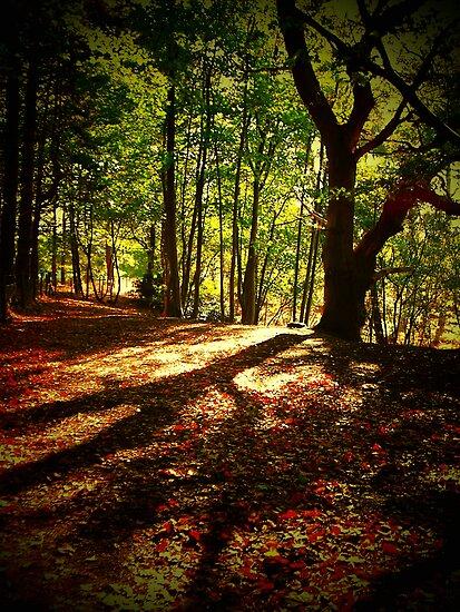 PORINGLAND WOOD, NORFOLK by ANNETTE HAGGER