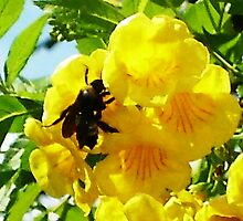 Busy BumbleBee II by Sarai