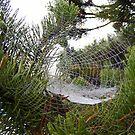 Spider Web Box by lareejc