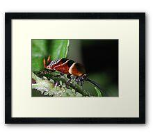 Roach Framed Print