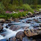 Rock Creek, Eastern Sierra by Justin Mair