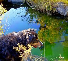 Buddy asks, Mirror, Mirror on the Creek, Who is the Fairest Dog of All? by Edward Henzi