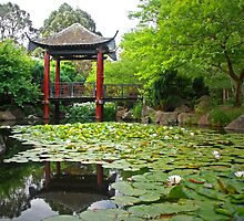 Fagan Park Chinese Garden by George Petrovsky