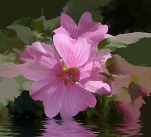 abstract of Lavatera flooded by hilarydougill