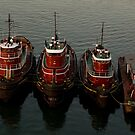 Three Tugs by gatorjack