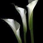 White Elegance by Marsha Tudor