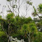 Cabbage Trees  Botanic Gardens Wellington  New Zealand by Sandra  Sengstock-Miller