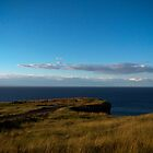 Bell Island Coast by Daphne Johnson