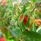 Strawberry Jam by lareejc