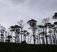 Pines Landscape by Willy Vendeville