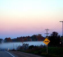 Fog Patch  by Daniela Weil