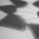 Shadow flower - cocktail umbrella abstract photograph by CDCcreative