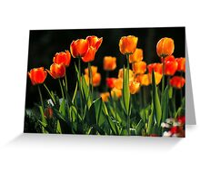 TULIPS* Greeting Card