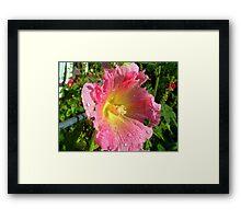 pink holly Framed Print
