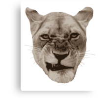 Annoyed Snarling Lion Cat Canvas Print
