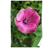 Early Summer Blooms Impressions – Bright Pink Malva Vertical Poster