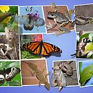 Collage of Australian Native Wildlife by peterstreet