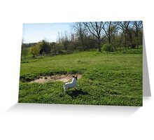 Jump for Jack Russell Joy Greeting Card