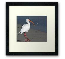 Ibis on Beach Framed Print