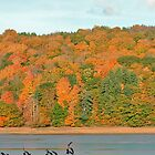 Bear River - Fall 2005 by Gerry Curry