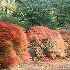 Small Autumn Trees  by Iani