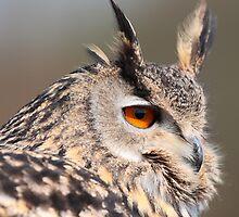 Eurasian Eagle Owl by David Webster