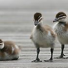 Three Ducklings by Tina Dial
