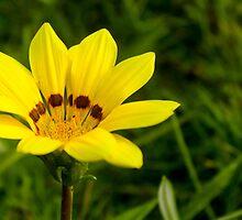 Garden Flower by lm31