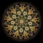 Mandala by Nina Toulmin