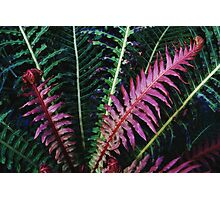 Red Fern #2 Photographic Print