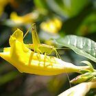 Grasshopper Hiding by Charmaine Nelson